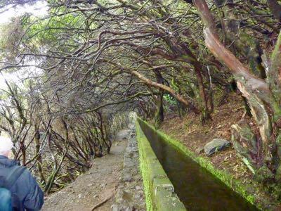 Madeira: Levada walks